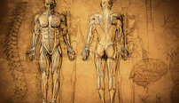 Human Anatomy and Physiology Online Bundle, 3 Certificate Courses