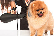 Dog Walking and Pet Home Sitting Professional Online Bundle, 2 Certificate Courses