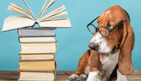 Animal Psychology Online Bundle, 2 Certificate Courses