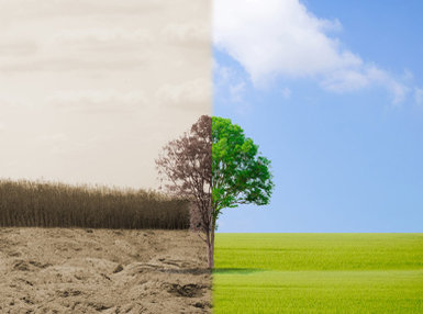 Environmental Legislation and Policy Online Bundle, 2 Certificate Courses