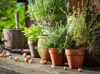 Culinary Herbs Online Bundle, 3 Certificate Courses