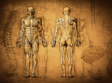 Anatomy and Physiology - Advanced Online Bundle, 2 Certificate Courses