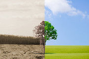 Environmental Management Online Bundle, 3 Certificate Courses