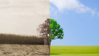 Business and the Environment Online Bundle, 5 Certificate Courses